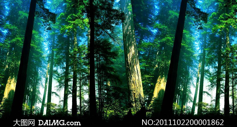 原始森林摄影图片素材下载 关键词: 森林深林原始森林丛林树木树叶