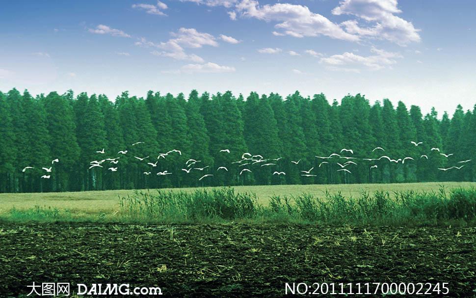 关键词: 森林飞翔森林树林风光风景自然天然原始环保绿色蓝天白云飞翔
