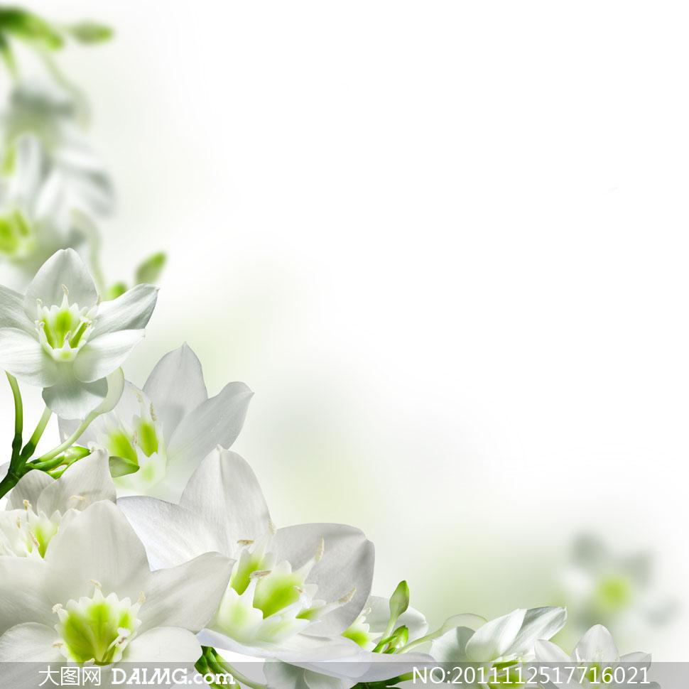 白色鲜花边框背景高清图片 - 大图网设计素材下