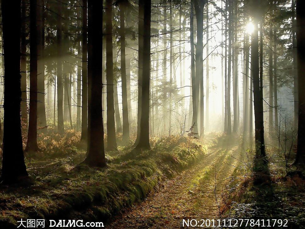 关键词: 高清摄影图片大图素材风景风光树林森林大树树木阳光黄昏秋天
