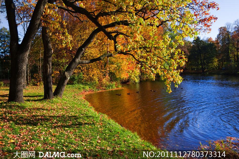 公园湖畔树林秋天自然风景高清摄影图片 - 大图