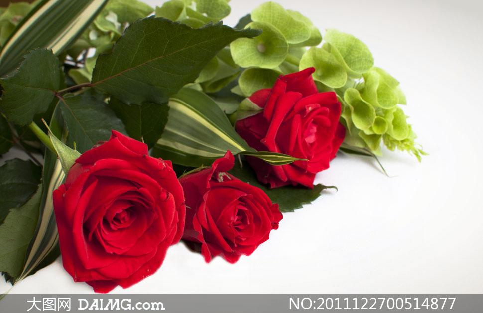 红色玫瑰花朵特写镜头高清摄影图片 - 大图网设计素材