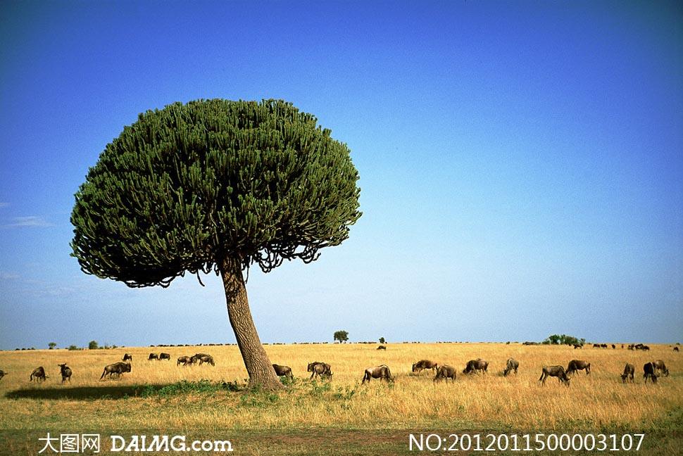 大树美丽大自然自然风景自然景观摄影高清图片素材