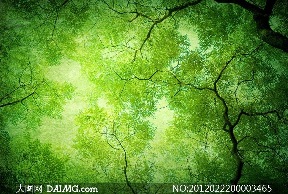 绿色天空自然背景图片素材