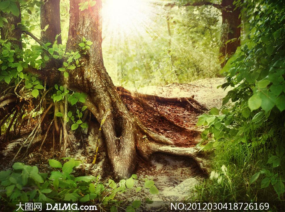 树林里的盘根错节的树根高清图片下载