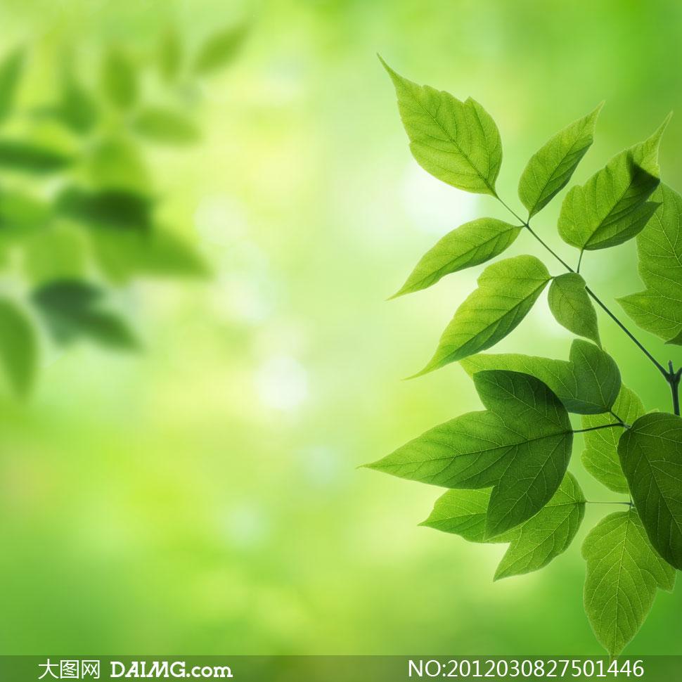 高清大图图片摄影素材春天春季树叶绿叶叶子散景唯美