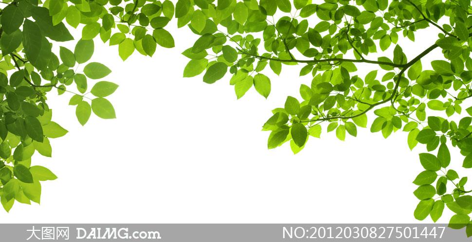春天绿油油清新树叶高清摄影图片
