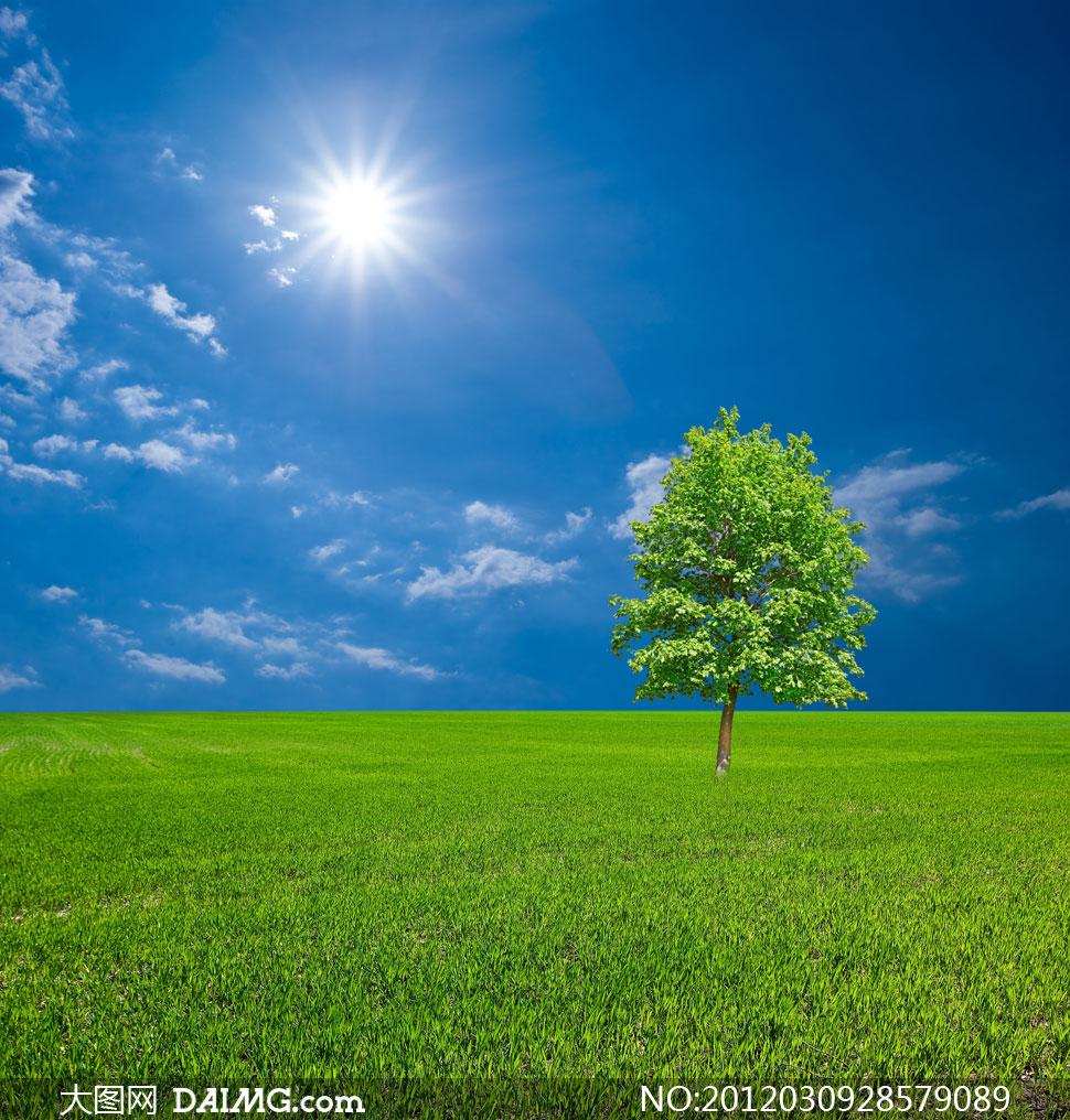 蓝天白云草地上的大树高清摄影图片 - 大图网设计素材