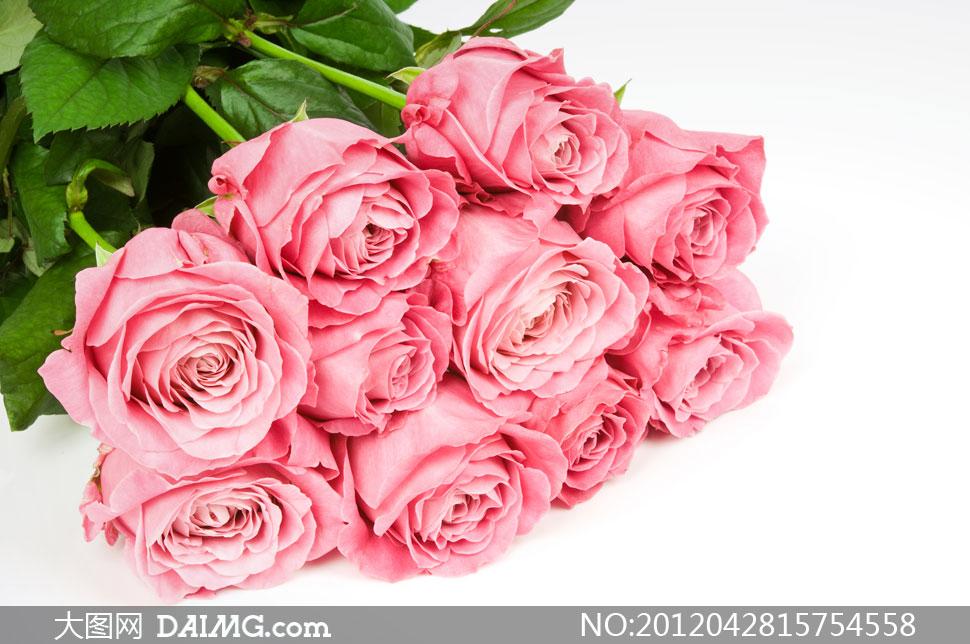 花束 株洲,11枝粉玫瑰 扇形花束,玫瑰花束包装方法图解,粉玫瑰