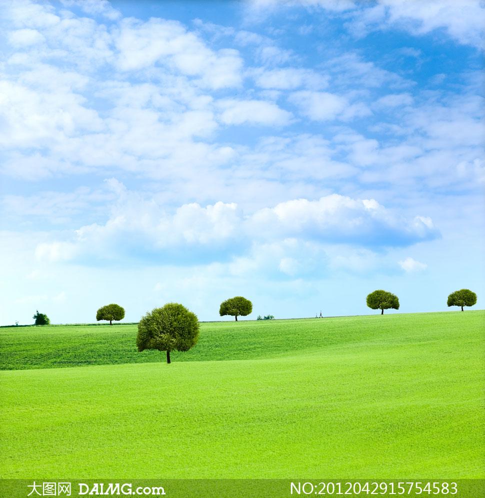 蓝天白云大树图片素材