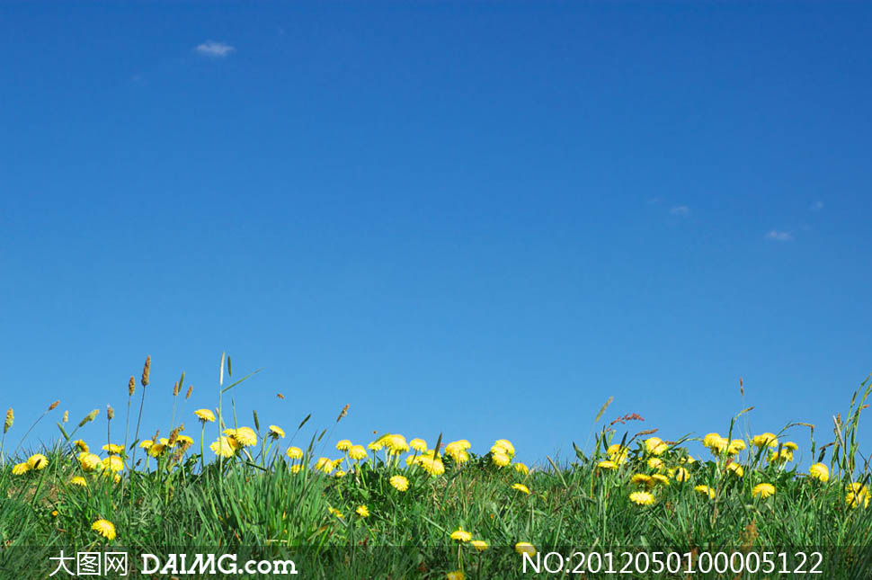 大图首页 高清图片 自然风景 > 素材信息  蓝天下的小草和菊花摄影