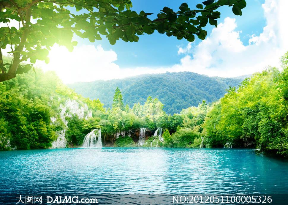 绿色清新阳光树藤树叶藤条树枝