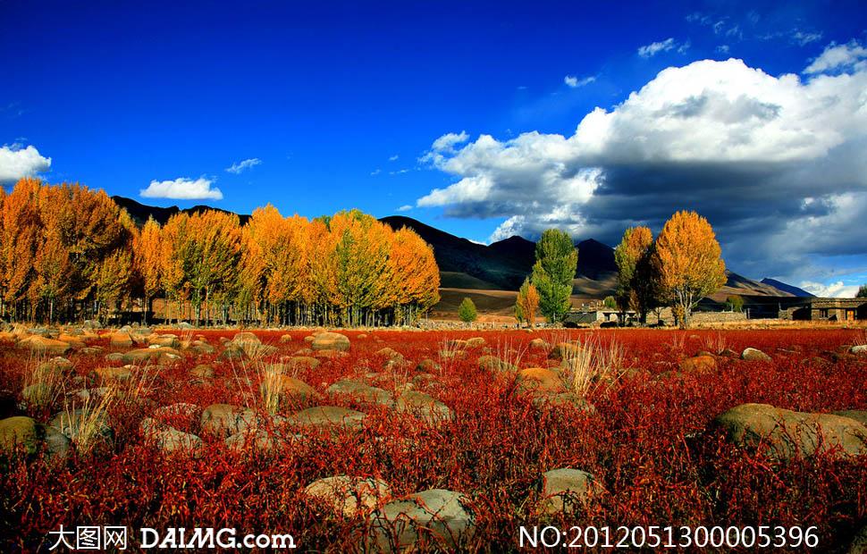 大图首页 高清图片 自然风景 > 素材信息  秋季野外自然景观摄影图片