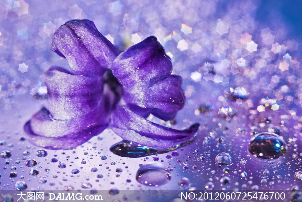 紫色花朵与梦幻水珠背景高清图片