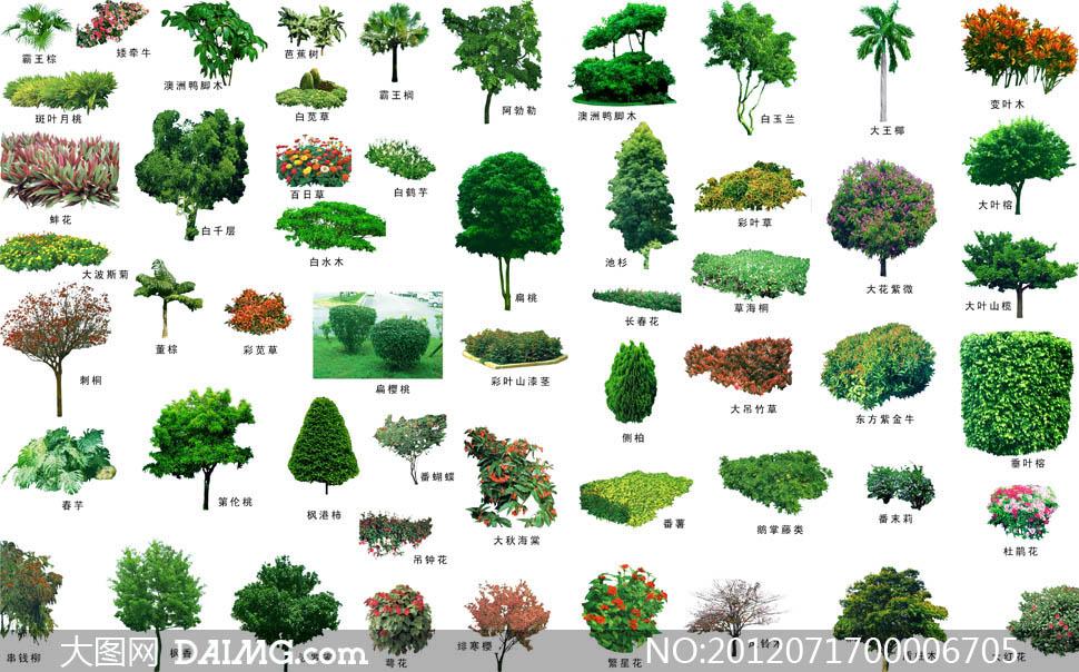 各种各样景观园林树木psd分层素材