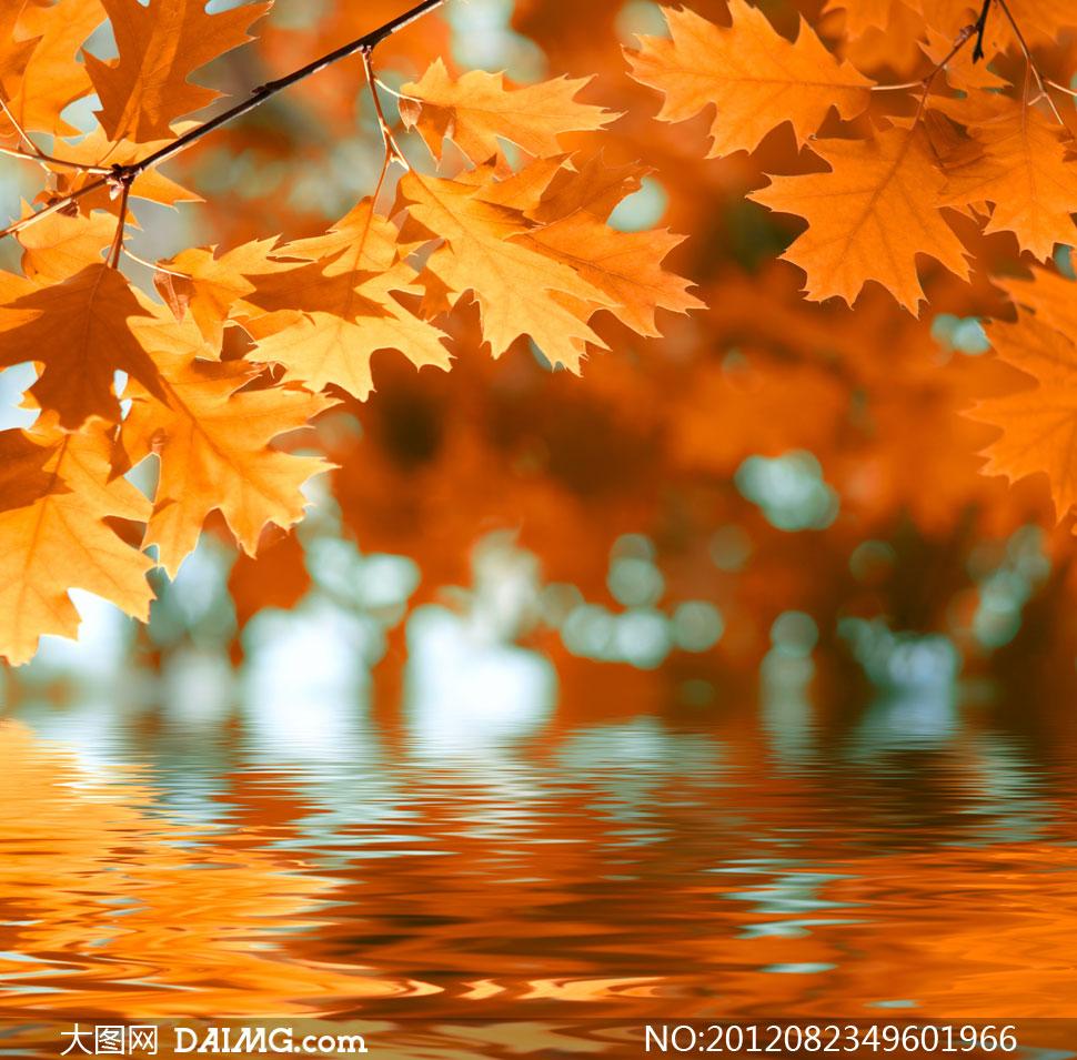 秋天树叶与水中倒影摄影高清图片