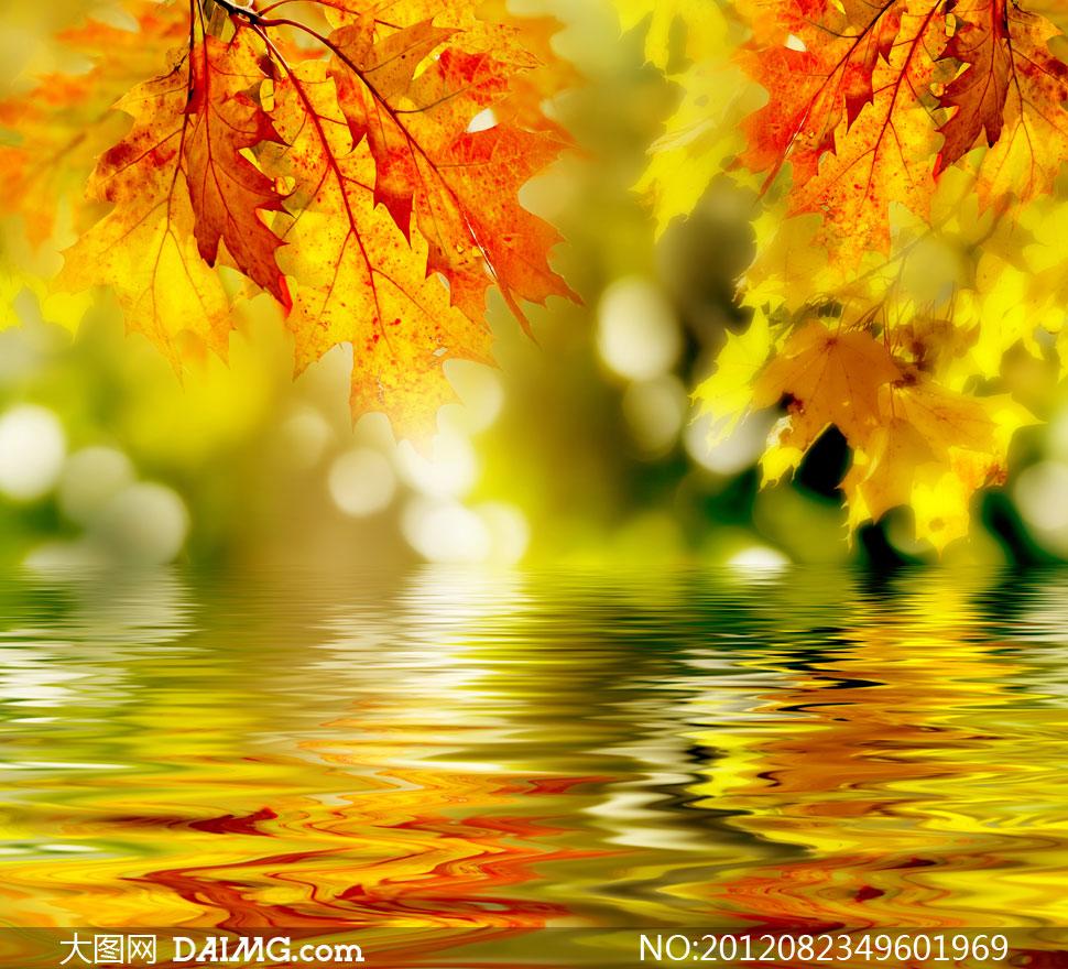 秋天树叶与倒影近景摄影高清图片