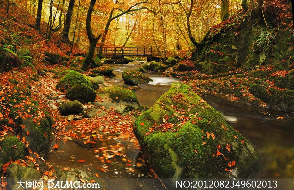 秋天风景的日记