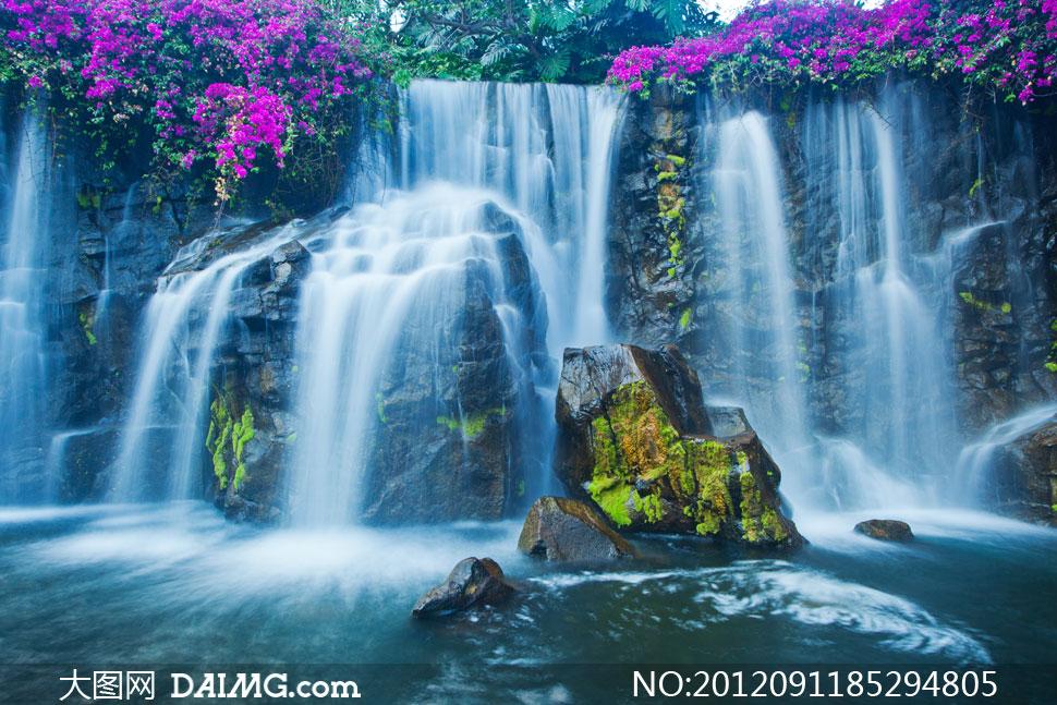 高清摄影图片素材大图自然风光风景树木大树树丛