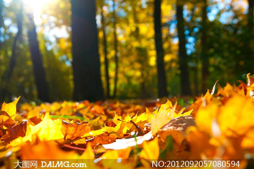 高清摄影大图素材图片风景风光自然落叶叶落秋天