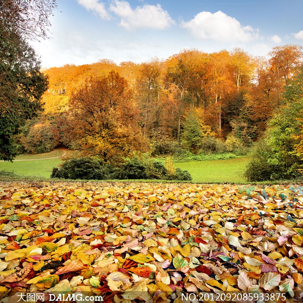 大图首页 高清图片 自然风景 > 素材信息  满地的落叶与山林风光高清