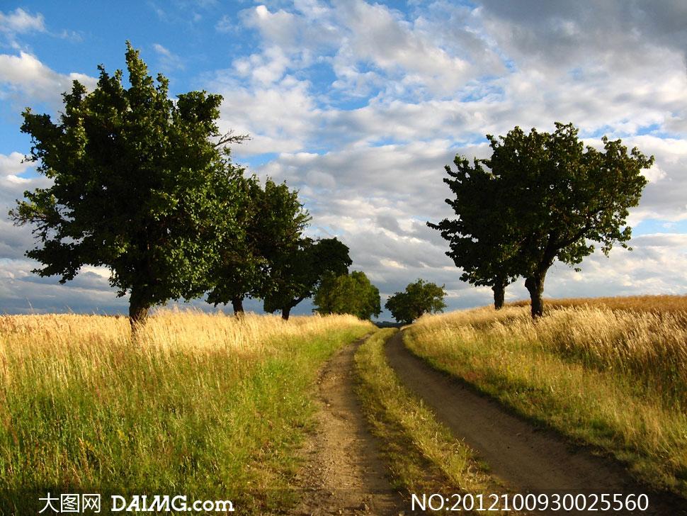 蓝天白云草地大树影楼摄影背景图片