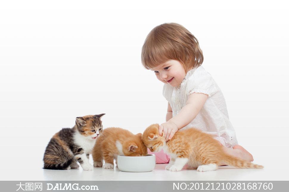 小女孩与三只可爱猫咪摄影高清图片